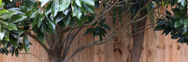 Wooden paling fence. Wooden post and rail fence. Fencing contractors Auckland.